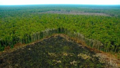 Deforestación en la selva. Imagen ilustrativa