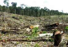Áreas deforestadas se ubican en los distritos Pinto de Recodo y Caynarachi